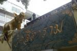 วัดสิตาราม (วัดคอกหมู) ถนนดำรงรักษ์ แขวงมหานาค เขตป้อมปราบศัตรูพ่าย กรุงเทพมหานคร