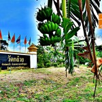 วัดกล้วย บ้านกล้วย ตำบลกะมัง อำเภอพระนครศรีอยุธยา จังหวัดพระนครศรีอยุธยา