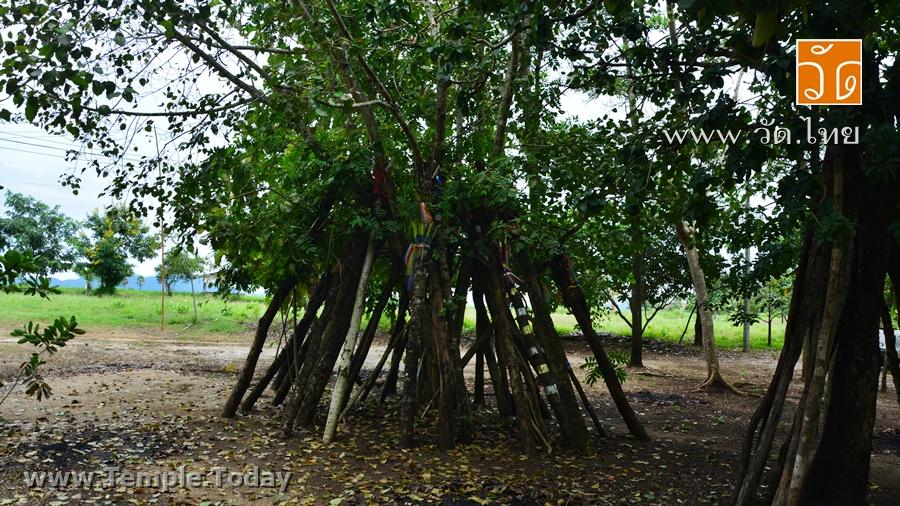 สำนักสงฆ์สบเป๊าะ (Ban Sop Po House of priest) ตั้งอยู่ บ้านสบเป๊าะ ตำบลแม่ทะ อำเภอแม่ทะ จังหวัดลำปาง 52150