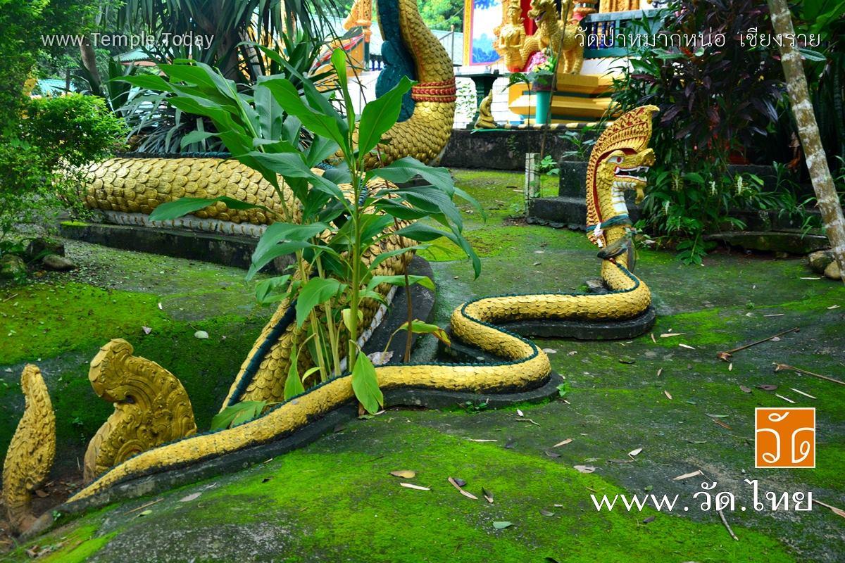 วัดป่าหมากหน่อ (Wat Pa Mak Nor) และ พระธาตุโยนกนครแสงคำ ตำบลจันจว้า อำเภอแม่จัน จังหวัดเชียงราย 57110